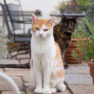 Cats | PawPrints Furever