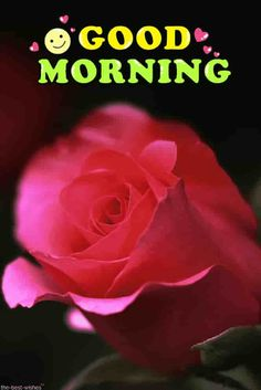 Looking for best Good Morning Wishes and Images with Rose? Check out our collection of beautiful HD Images, Pictures and Pics to send to your loved ones and spread a smile on their faces. Good Morning Beautiful Gif, Good Morning Rose Images, Good Morning Romantic, Good Morning Roses, Good Morning Images Download, Good Morning Gif, Good Morning Picture, Good Morning Messages, Good Morning Greetings