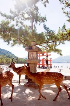 Miyajima Island, {Mainland} Japan