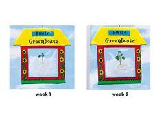 Watch-It-Grow Window Greenhouse - Each