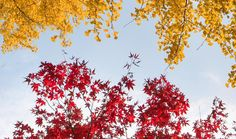 Colorful Ideas for Autumn Birthdays | DaySpring