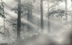 Gloomy Forest