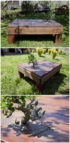 Miyagi Pallet Table With Incorporated Tree #Design, #Italy, #PalletFurniture, #PalletTable, #RecycledPallet, #Tree