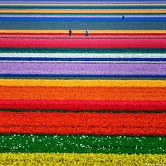 Spring Tulips in Holland!:) gretchnlee Spring Tulips in Holland!:) Spring Tulips in Holland! What A Wonderful World, Beautiful World, Beautiful Places, Amazing Places, Amazing Photos, Beautiful Boys, Beautiful Pictures, It's Amazing, Awesome Things