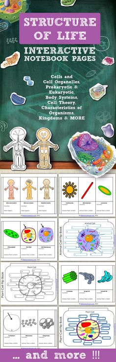 Structure of Life Science Interactive Notebook Pages - Journal Templates: Body Systems, Plant and Animal Cells, Cell Theory, Levels of Organization, Prokaryotic vs. Eukaryotic, Cell Organelles, Characteristics of Organisms and much more. Science Cells, Science Biology, Science Lessons, Teaching Science, Science Education, Science For Kids, Science Activities, Life Science, Science Fair