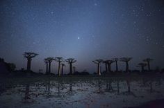 Baobab trees (Adansonia Grandidieri) reflecting in the water under the milky Way, Morondava, Toliara province, Madagascar. via @AOL_Lifestyle Read more: http://www.aol.com/article/2016/07/03/alien-hunter-claims-google-earth-shows-a-giant-pyramid-on-ocean/21423576/?a_dgi=aolshare_pinterest#fullscreen