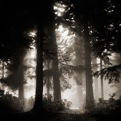 Amazing black and white photography Ebru Sidar