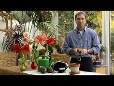 expertin verr t wie orchideen gedeihen youtube orchiden pinterest buffet orchid and bonsai. Black Bedroom Furniture Sets. Home Design Ideas