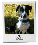 Pet of the Week   EntirelyPets Blog
