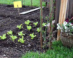 Fruchtfolge und Fruchtwechsel - was kann in welcher Reihenfolge angebaut werden.