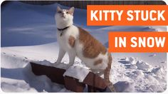 Cat Loves The Snow | Snow Party Right Meow