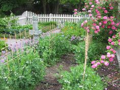 If you're looking for a garden that's practical as well as beautiful, consider growing a colonial kitchen garden. Read this article to learn more about how to create a colonial garden of your very own.