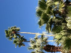 Why they call it Palm Springs.