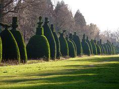 Topiary silhouettes - Clipsham Yew Tree Avenue
