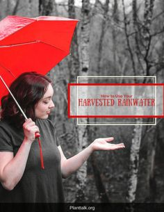 Everything you need to know about harvesting rainwater. Tips For Growing Tomatoes, Food Hacks, Food Tips, Colorado State University, Being Used, Need To Know, Gardening Tips, Easy