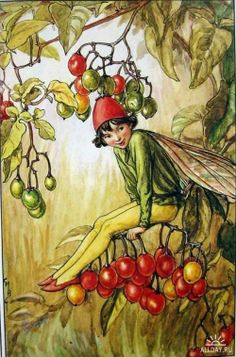The Nightshade Berry Fairy. Vintage flower fairy art by Cicely Mary Barker. Taken from 'Flower Fairies of the Autumn'. Click through to the link to see the accompanying poem. Cicely Mary Barker, Nightshade Flower, Flower Fairies Books, Kobold, Vintage Fairies, Fantasy Illustration, Fairy Land, Magical Creatures, Illustrators