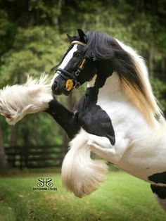 Amo cavalos!!!