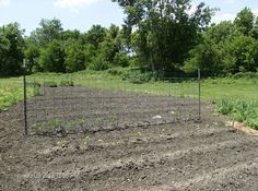 Cattle panels make the best tomato supports! My tomatoes get over 6 feet tall they still support them! Tomato Support, Cattle Panels, Outdoor Ideas, Outdoor Decor, Stepping Stones, Outdoor Gardens, Yard, Tomatoes, Garden Ideas