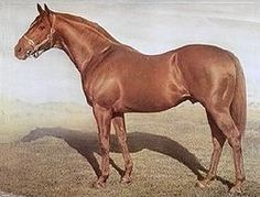 One of the most influential sires in Australian racing was STAR KINGDOM (Ire) Ch h 1946, Stardust (GB) - Impromptu. Won or placed 12 of his 16 starts, he was imported to stand at Baramul Stud in NSW. Only a breath over 15hh, he became leading sire with his fifth crop and four more times, seven-time leading 2yo sire and three-time leading broodmare sire. The first five Golden Slipper winners were by him. He died from a bowel blockage, at the age of 21, on 21 April 1967.