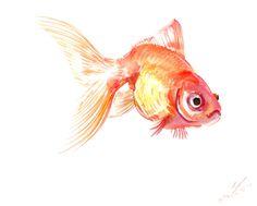 Goldfish Watercolor Paintings   Goldfish, original watercolor painting, 8 X 10 in, fish art, aquarium ...