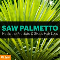 Saw Palmetto Benefits the Prostate & Stops Hair Loss - Dr. Axe