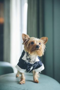 12 Times Animals Dressed Up Like Humans for the Wedding | https://www.theknot.com/content/animals-dressed-like-humans-for-the-wedding