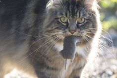 Researchers strap cameras on strays to track their patterns.