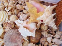 Does your travel style include collecting seashells by the seashore? The perfect beach shadowed in part with palm trees, light breeze, store shells in plastic cups.  We'll take you there. Wild Side Destinations & Destination Weddings.travel 888-696-4202