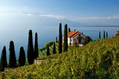 Lavaux by GregoireFillion  18mm beautiful blue fuji green lake landscape lausanne lavaux light sea sky sun switzerland trees wa