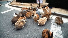 """Imagine an island filled only with rabbits. Okunoshima is a small island in Japan's Inland Sea. It's called """"Rabbit Island"""" because of the thousands of feral. Bunny Island, Rabbit Island, Tier Fotos, Small Island, Dog Houses, Cute Bunny, Snuggles, Mystery, Cute Animals"""
