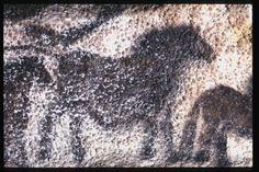 MONTIGNAC (Dordogne, 24). Grotte de Lascaux. Bilan des études. Récapitulation. Légende : Diverticule axial, paroi droite, frise des petits chevaux : deuxième cheval de profil droit. Peintures effectuées sur de la calcite et qui commencent à être recouvertes de calcite. Secteur 2, paroi droite, panneau 2, figure 08