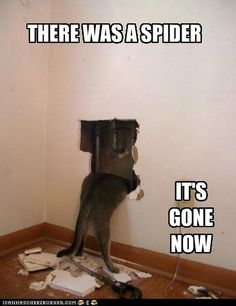 THERE WAS A SPIDER. Dog meme