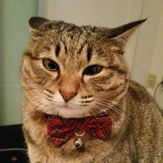「おはにゃーん❗morning❗  寝起きです。just woke up  #ねこ #猫 #猫写真 #ネコ #しましま軍団 #キジネコ #キジトラ #きじねこ #きじとら #cat #catstagram #instacat #kitty #tabby #neko #meow #고양이」