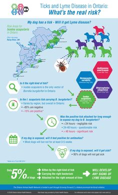 Ticks and Lyme Disease in Ontario: What's the real risk? – Infographic and References | Ontario Animal Health Network