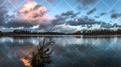 stillekern zeewolde boompje in water zonsondergang