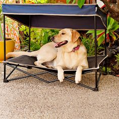 Keep your pet cool and safe from harmful UV rays with this portable outdoor instant pet shade with elevated mesh bed. It features a sturdy steel frame and durable PVC-backed polyester construction designed to withstand the rigors of outdoor use. Outside Dog Bed, Game Mode, Pekinese, Pet Beds, Dog Houses, Dog Accessories, Summer Accessories, Dog Mom, Dog Life