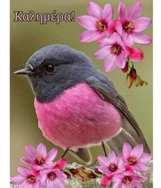 Birds With Blue Feathers, Happy Easter Everyone, Birds And The Bees, Robin Bird, Pink Bird, Relaxing Music, Colorful Birds, Bird Watching, Wildlife Photography