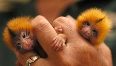 Tiny Animals on Fingers
