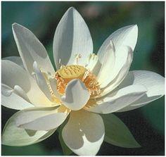 Enseñanza de BUDA: ¡Gracias, gracias, gracias!       Reflexión: ¡Gracias, gracias, gracias!   En una ocasión un hombre vino a Buda y le escupió la c...