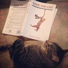 """Liking the person we go on a journey with is the single most important element in drawing us into the story."" Save The Cat , by Blake Snyder 