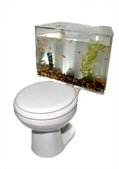- In June I posted an Aquarium Washbasin. Now, I see you could 'fish up' your bathroom even more with an Aquarium Toilet. The Aquarium To. Modern Fish Tank, Unique Fish Tanks, Cool Toilets, Fish Tank Design, Amazing Aquariums, Fish Home, Tanked Aquariums, Fish Aquariums, Aquarium Fish Tank