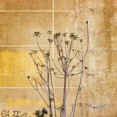 Abstract tree | @inlenso #inlenso #photo #blackandwhite #blackandwhitephotography #blackwhitephotography #mono #monochrom #art #artist #artwork  #travel  #instaphoto #instaart #instagood  #vscocam #vscogood #landscape #fineart #followme #wall #abstract #abstractart #texture #photooftheday #stilllife #tree #vsco