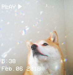 M O O N V E I N S 1 0 1 #vhs #aesthetic #doge #dog #bubbles #cute