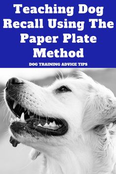 Dog House Palets Teaching Dog Recall Using The Paper Plate Method. House Palets Teaching Dog Recall Using The Paper Plate Method. Tiny Dog Breeds, Best Dog Training, Training Pads, Obedience Training For Dogs, Crate Training, Training Classes, Training Equipment, Cesar Millan, Easiest Dogs To Train