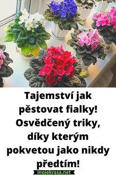 Gerbera, Orchids, Succulents, Flowers, Plants, Gardening, Lawn And Garden, Succulent Plants, Plant