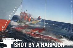 Does Canon support shooting whales? | Greenpeace International