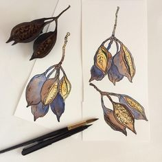 Ink & watercolour sketch of Kurrajong seed pods by Zoya Makarova Paper: Fabriano Artistico CP watercolour paper Ink: Pentel pocket brush pen Paints: Winsor & Newton watercolours Best Sketchbook, Artist Sketchbook, Sketchbook Ideas, Australian Wildflowers, Australian Flowers, Winsor And Newton Watercolor, Pen And Watercolor, Pentel Pocket Brush Pen, Travel Doodles