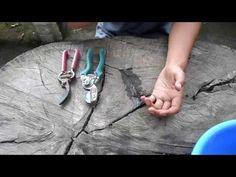 Curso de orquídeas on-line: Herramientas para el cuidado de Orquídeas - YouTube