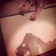 """Stan"" the T. rex. #hmnspaleo"