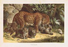 11 Best Wildlife Art Prints By Allison Richter Images Wildlife Art